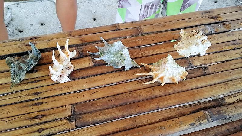 siargao_island_hopping_guyam_shells