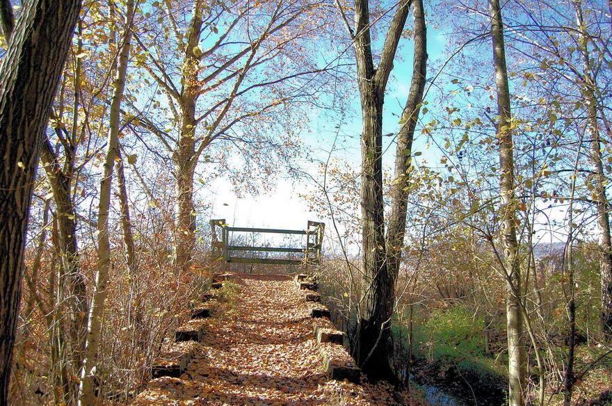 philippinen_blog_autumn_in_forest