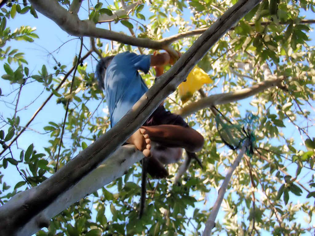 man-climbing-tree
